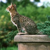 猫12.jpg